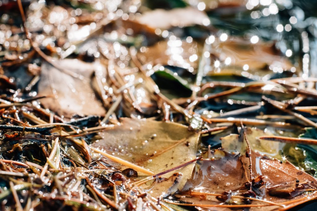 Autumn leaves in the water 3 - free stock photo