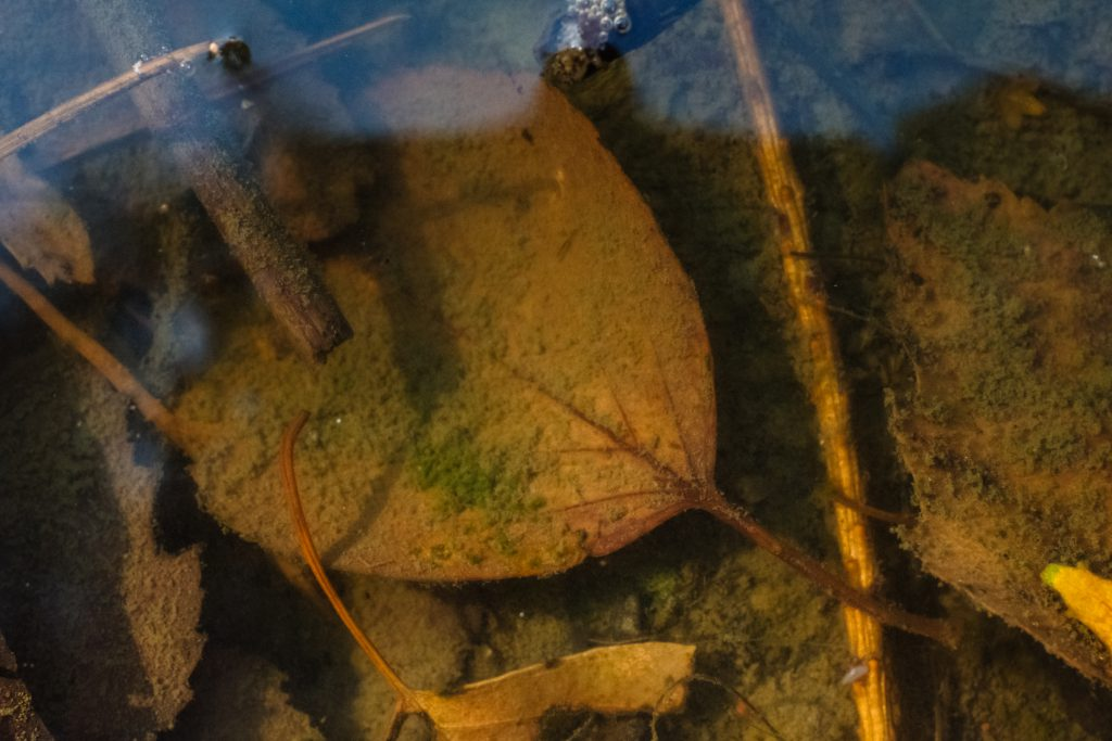 Autumn leaves under water - free stock photo