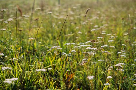 Wild flowers meadow - free stock photo
