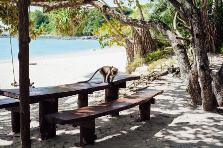 A monkey on a beach in Thailand - free stock photo