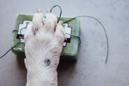 Dog's paw on a soap bar - free stock photo