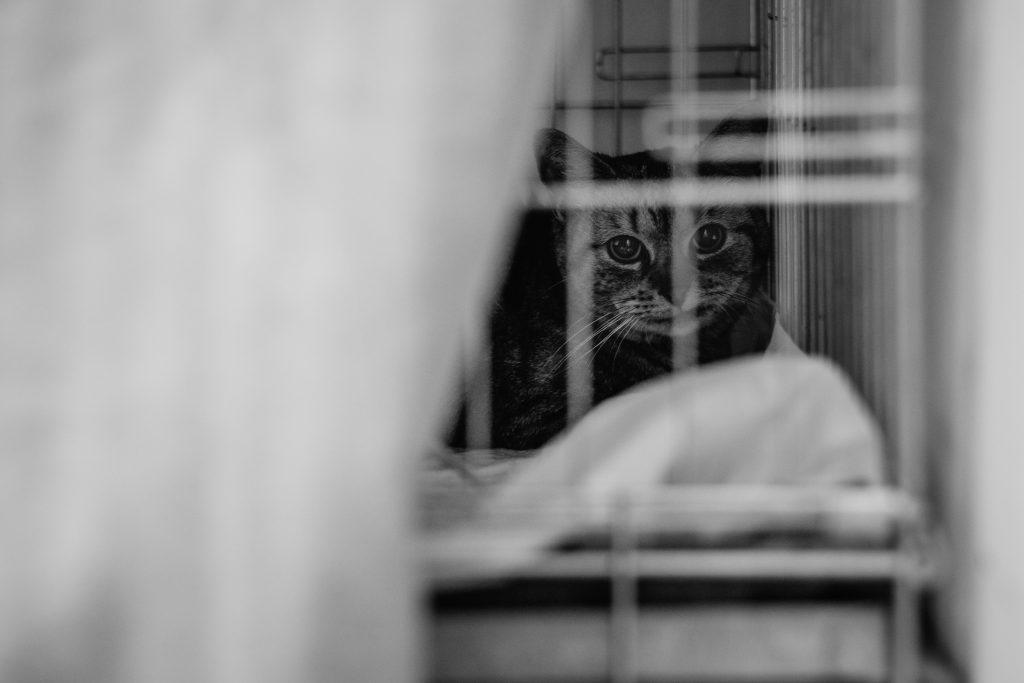 A cat at a vet hospital - free stock photo