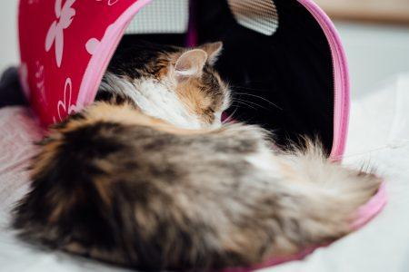 A cat at a vet hospital 2 - free stock photo