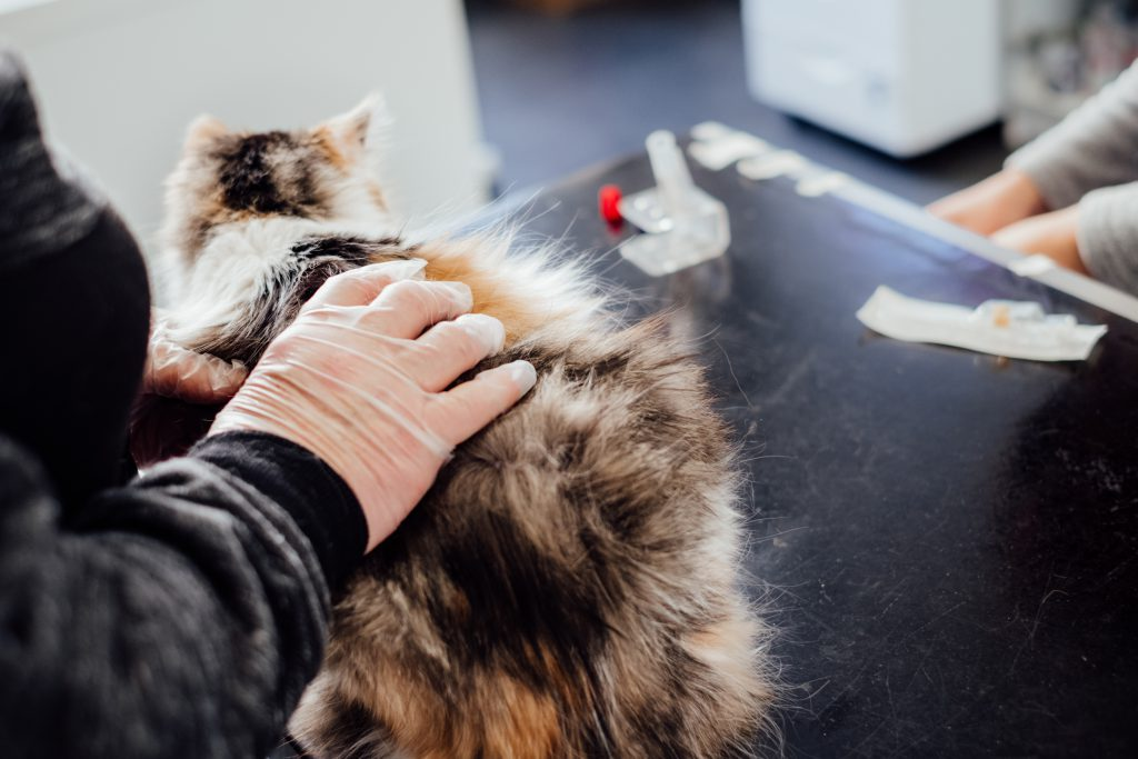 A cat at the vet - free stock photo