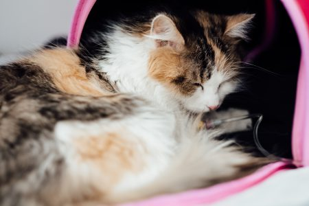 A cat having an IV fluid therapy 3 - free stock photo