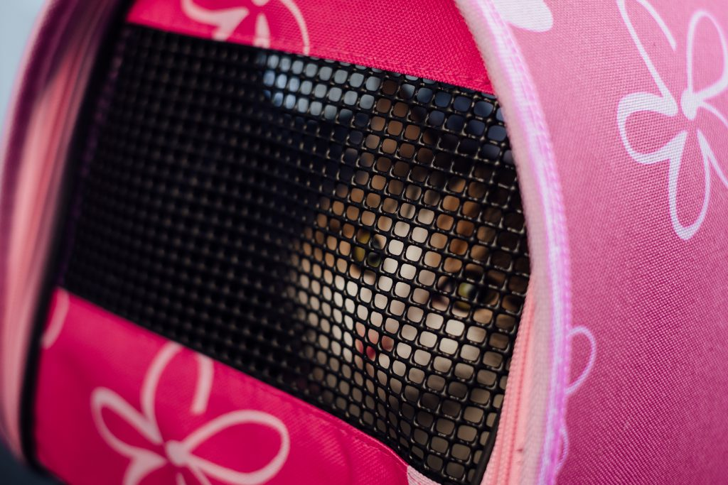 Cat in a carrier - free stock photo