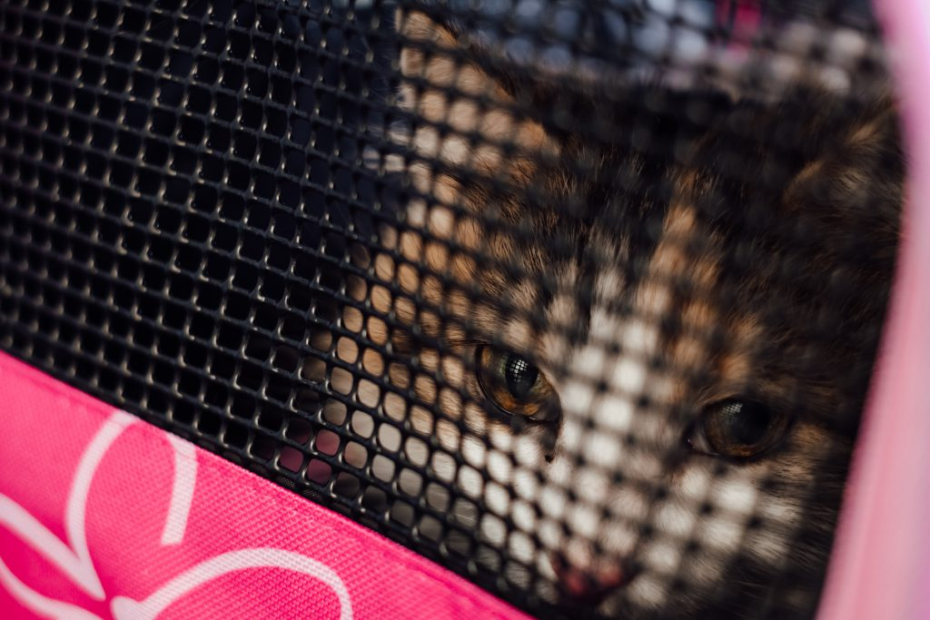 Cat in a carrier closeup - free stock photo