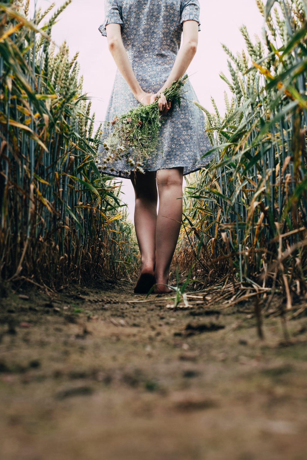 Girl standing in a triticale field 2 - free stock photo