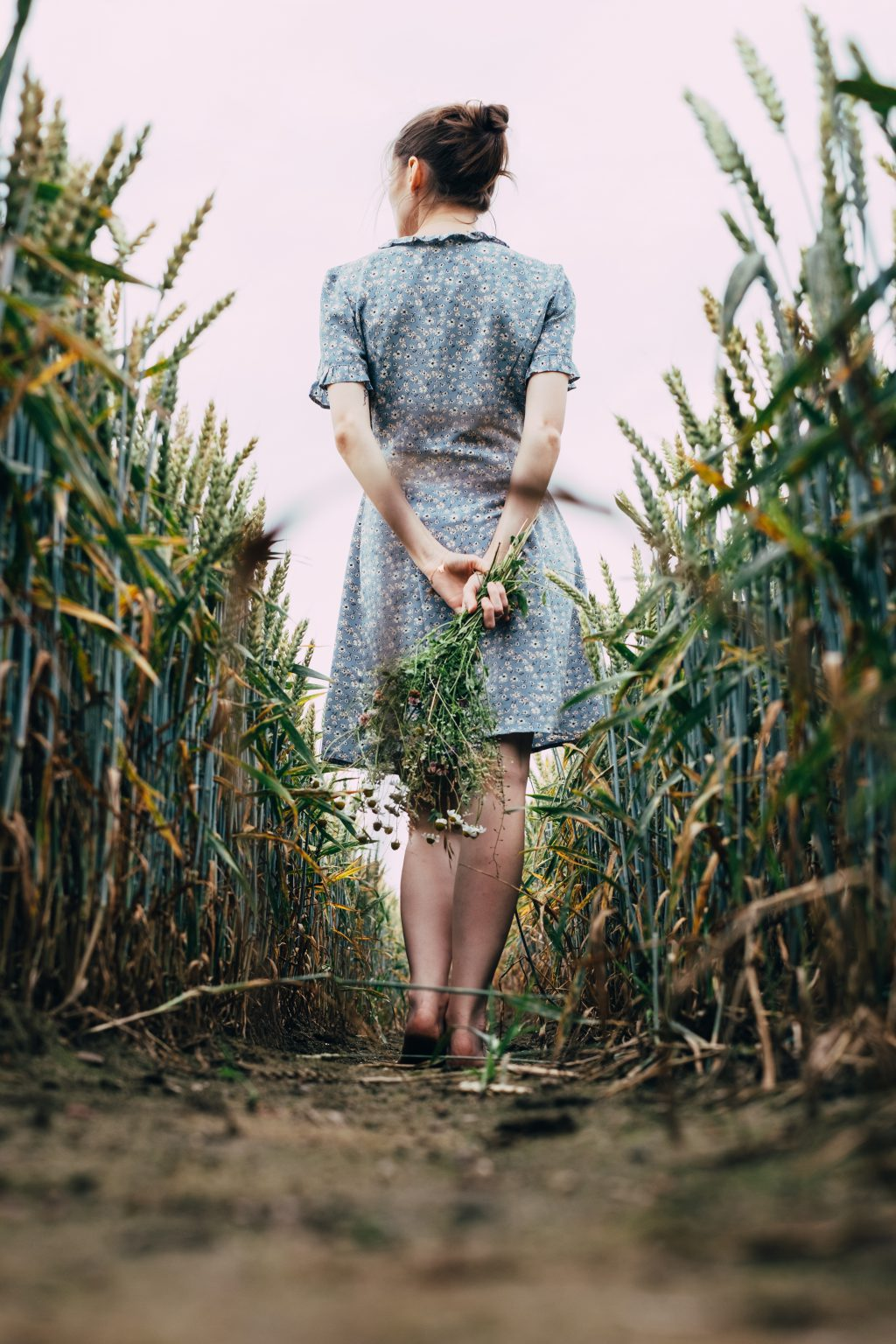 Girl standing in a triticale field 3 - free stock photo