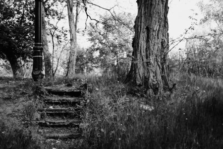 Old steps in the park - free stock photo
