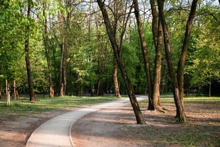 Pedestrian pavement in the park - free stock photo