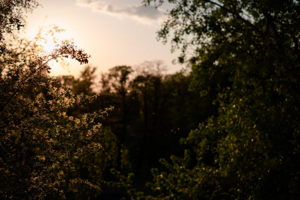 Trees and pollen at sunset - free stock photo