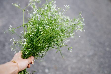 Wild flowers bouquet in a female hand 2 - free stock photo