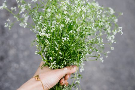 Wild flowers bouquet in a female hand 3 - free stock photo
