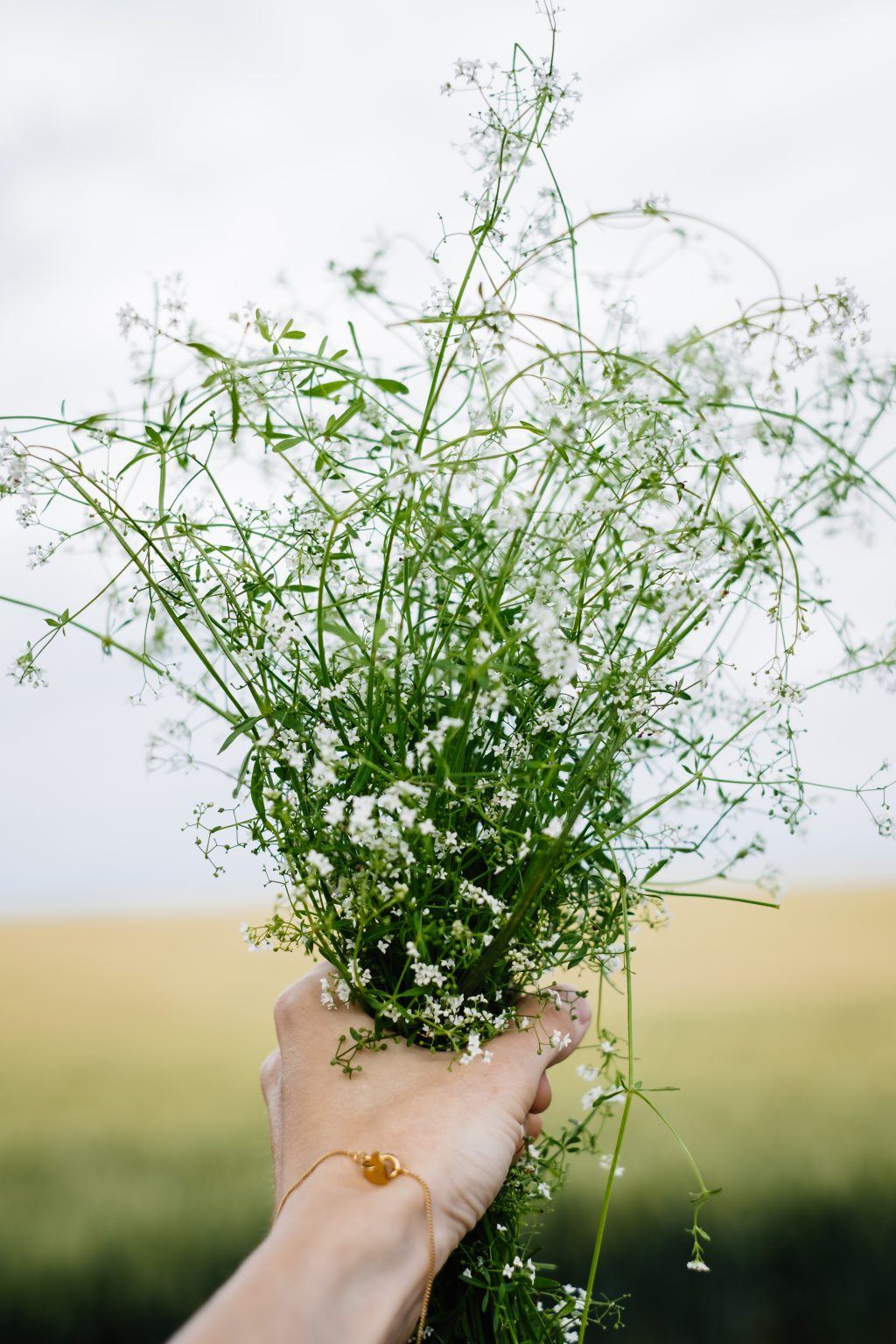 Wild flowers bouquet in a female hand 5 - free stock photo