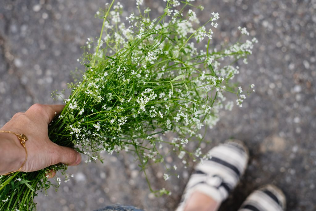 Wild flowers bouquet in a female hand 7 - free stock photo