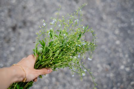 Wild forget-me-not flowers in a female hand - free stock photo