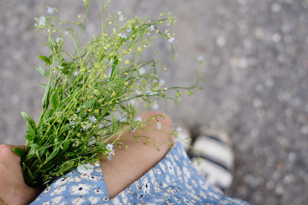 Wild forget-me-not flowers in a female hand 2 - free stock photo