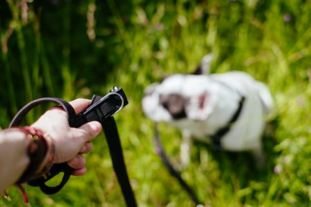 Female hand holding a dog leash - free stock photo