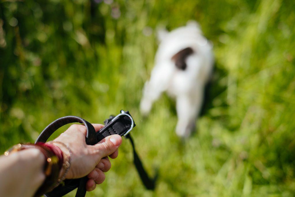 Female hand holding a dog leash 2 - free stock photo