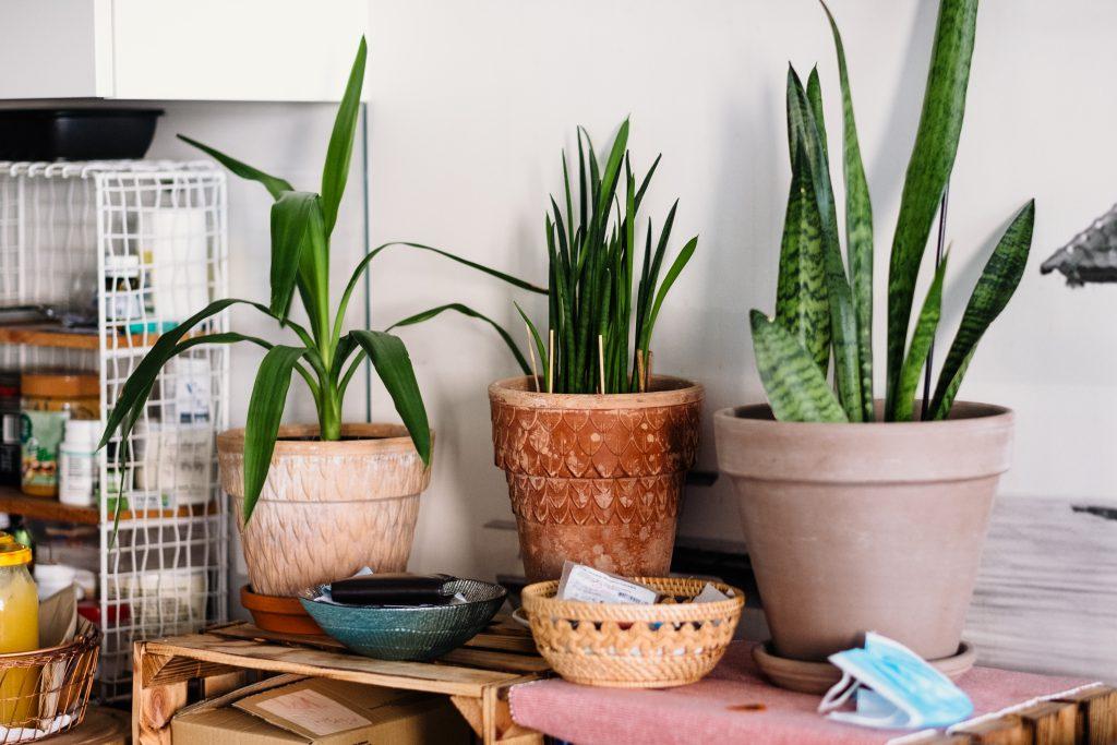 House plants - free stock photo