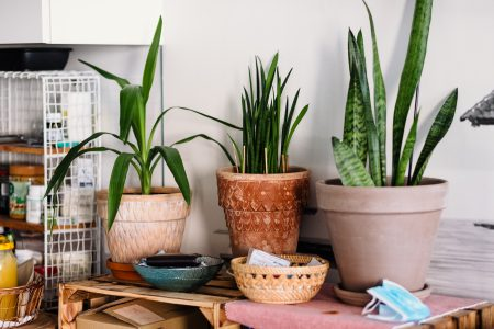 House plants - free stock photo