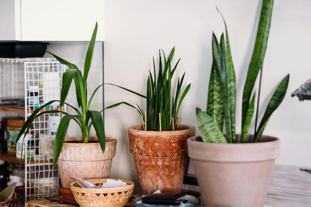 House plants 2 - free stock photo