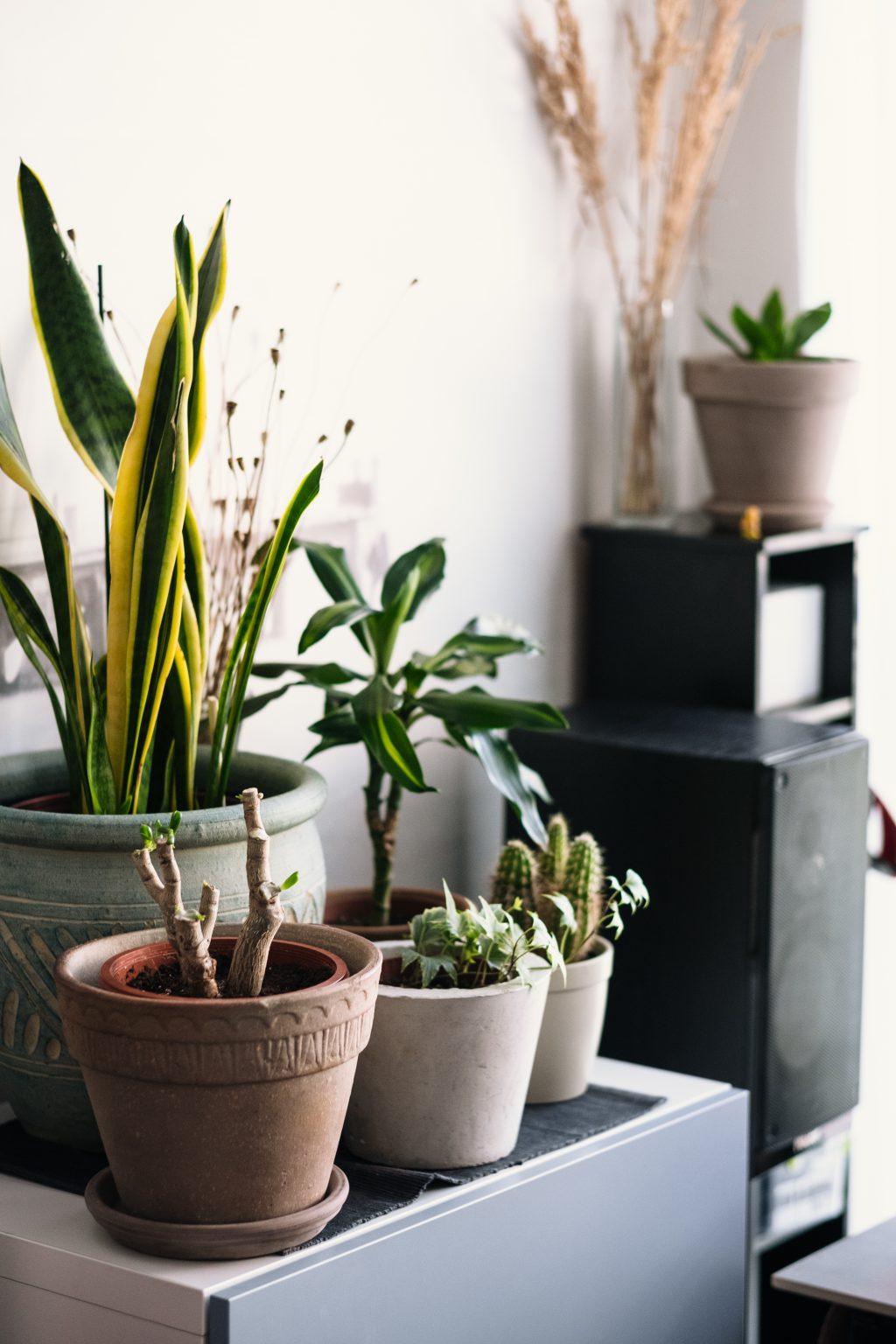 House plants 3 - free stock photo