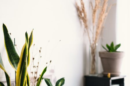 House plants 3 - free stock photo