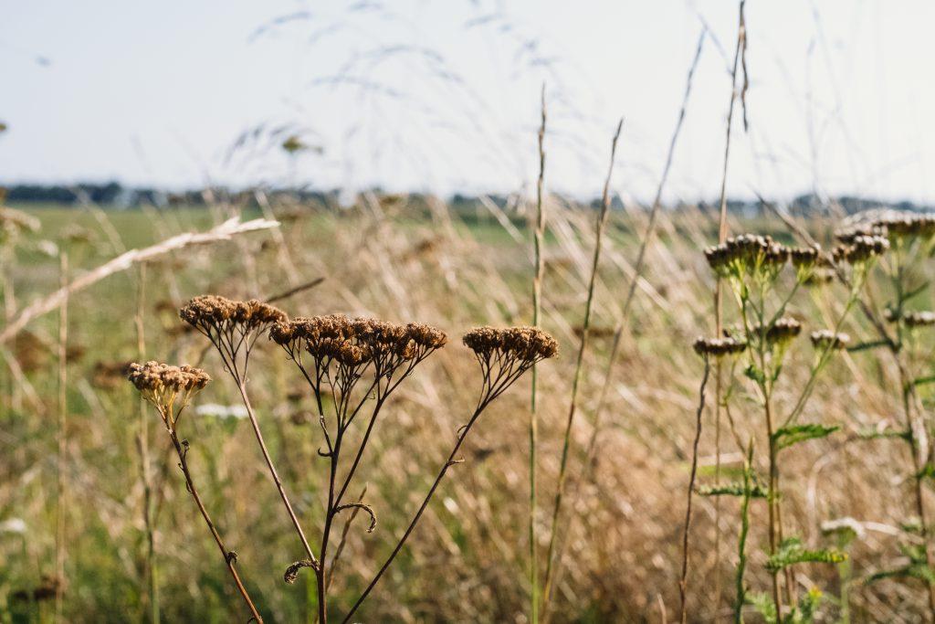 Dried wild flowers meadow - free stock photo
