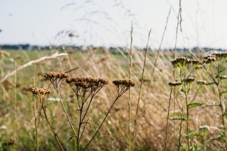 Dried wild flowers meadow - free stock photo