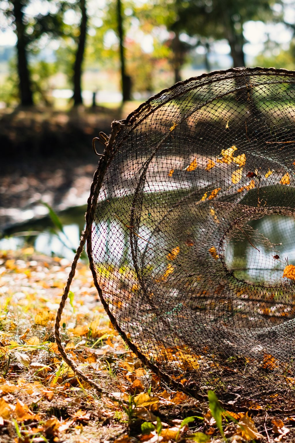 Fish net at the pond 2 - free stock photo