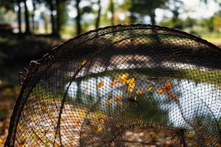 Fish net at the pond 3 - free stock photo