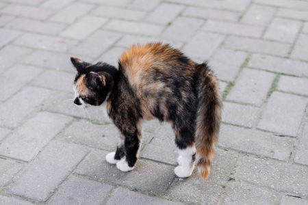 A scared kitten - free stock photo