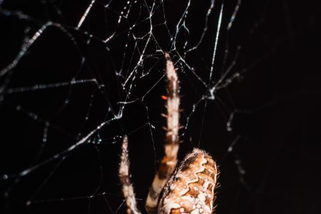 Spider on its web closeup - free stock photo