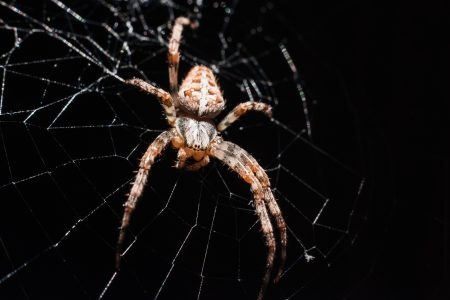 Spider on its web closeup 2 - free stock photo