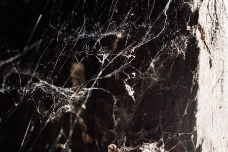 Spider webs - free stock photo
