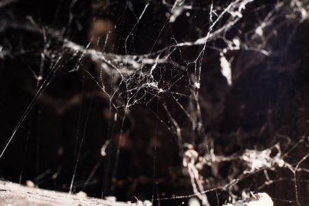 Spider webs 2 - free stock photo