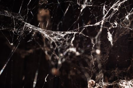 Spider webs 3 - free stock photo