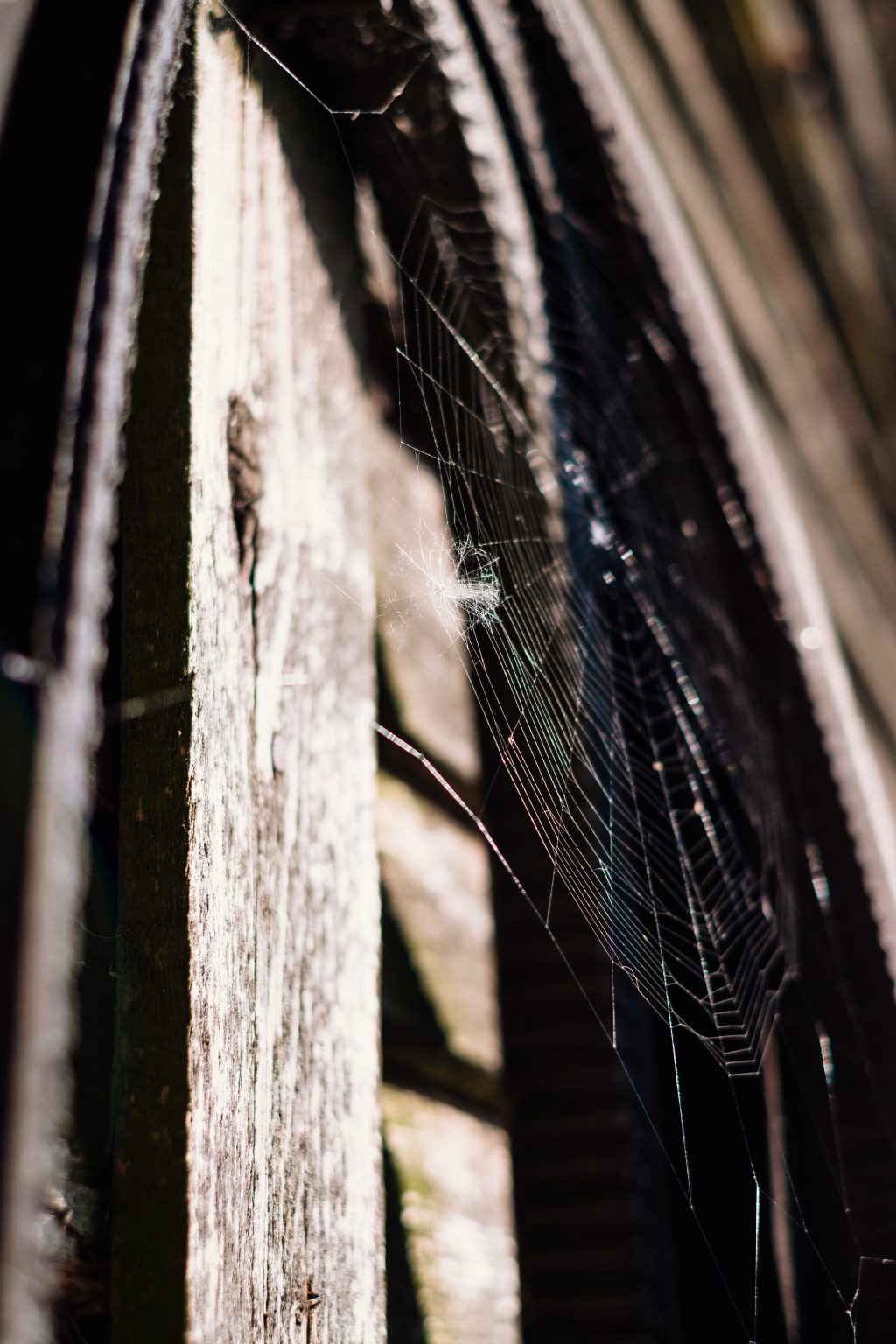 Spider's web 2 - free stock photo