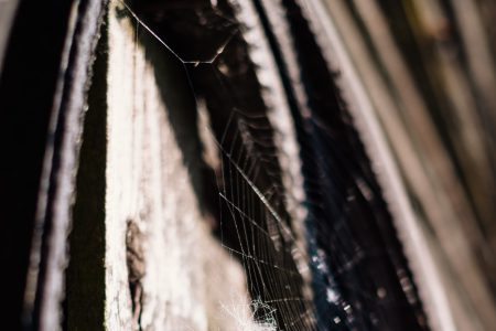 Spider's web 2 - free stock photo