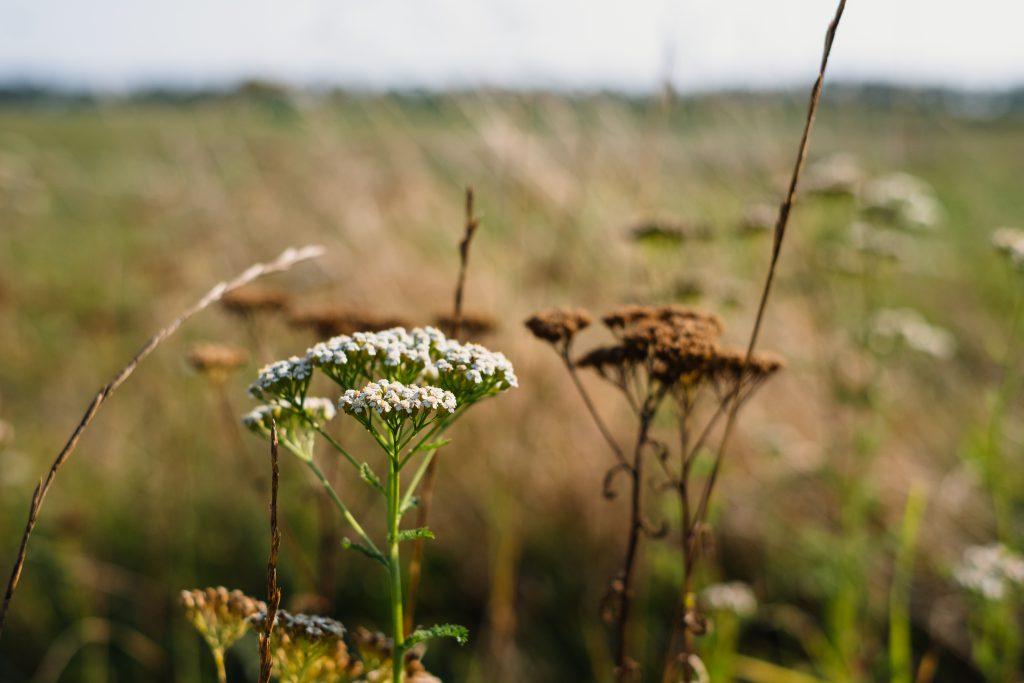 Wild flowers meadow 3 - free stock photo