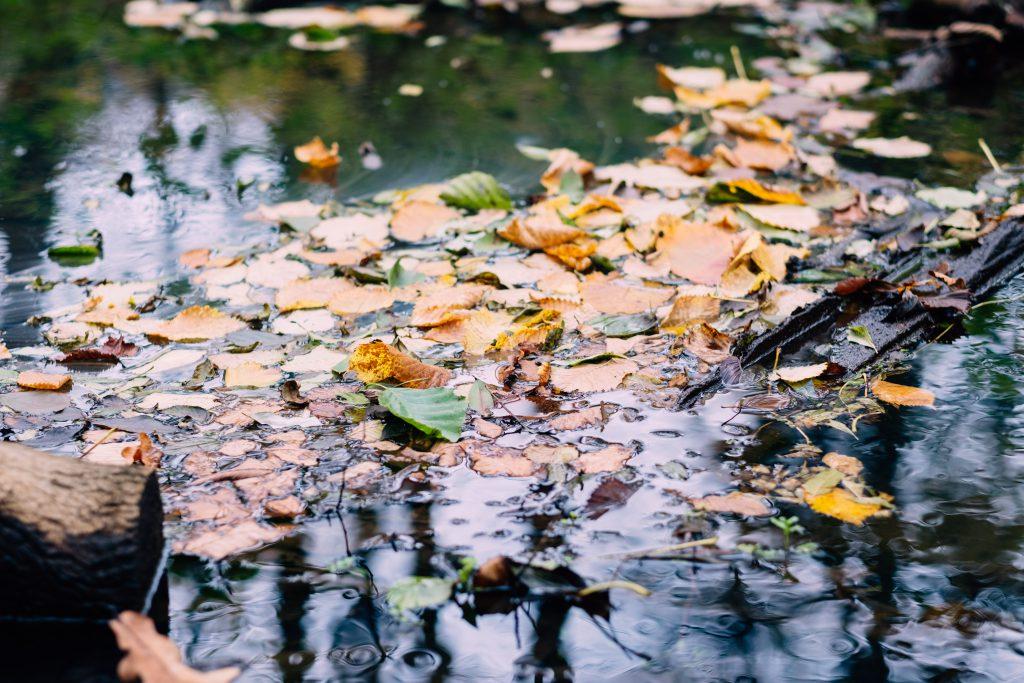 Fallen autumn leaves in a creek - free stock photo