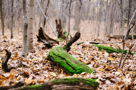 Fallen tree trunks covered in moss - free stock photo