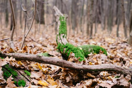 Fallen tree trunks covered in moss 3 - free stock photo