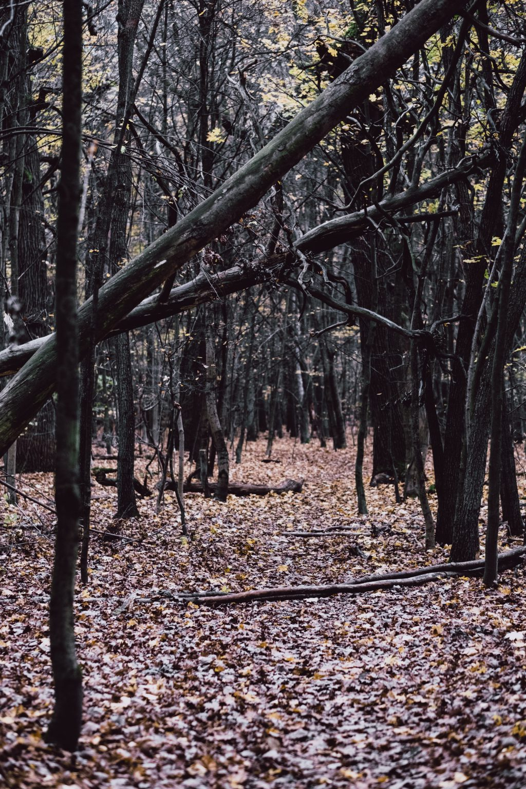 Late autumn forest - free stock photo