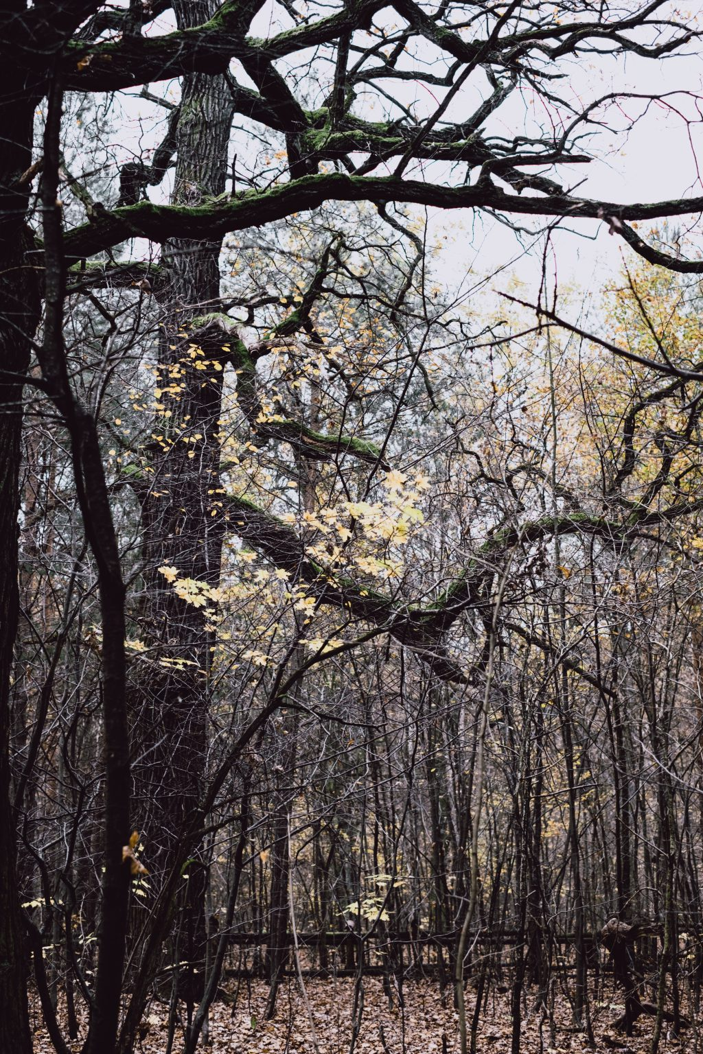 Late autumn forest 2 - free stock photo