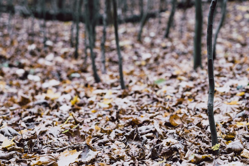 Late autumn forest 3 - free stock photo