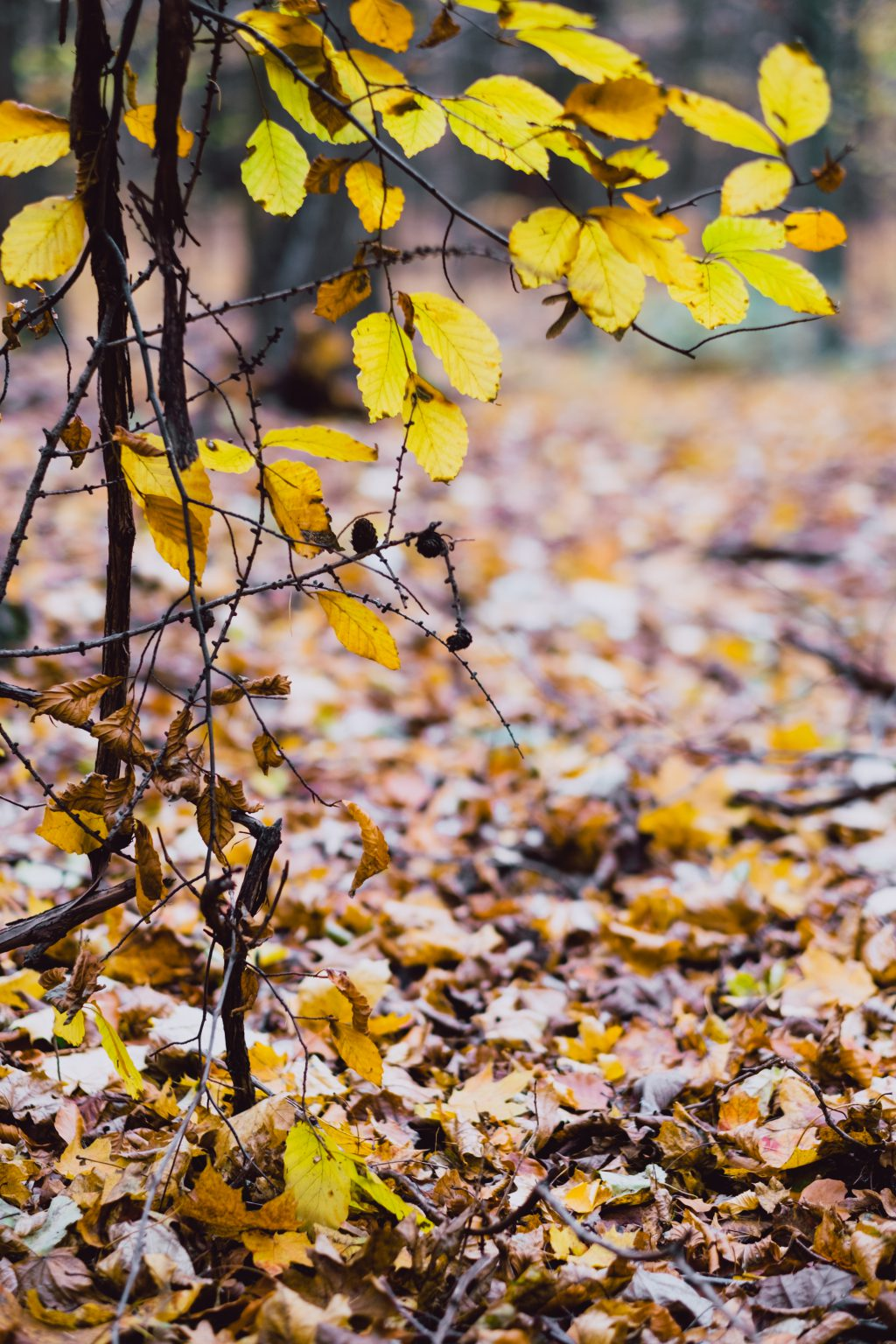Late autumn tree twigs - free stock photo