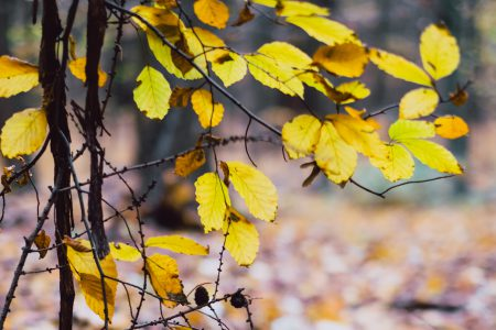 Late autumn tree twigs - free stock photo